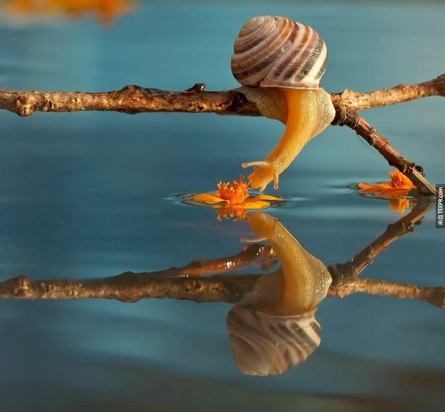這個人拍的25張照片推翻了之前我對蝸牛的所有看法。太神奇了!