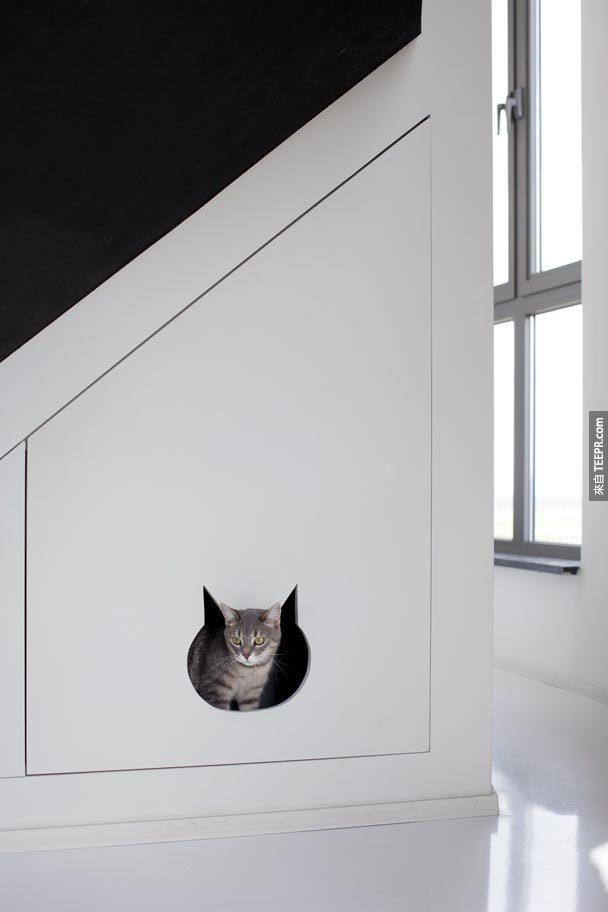 即使是他的猫的空间也有特别的设计。