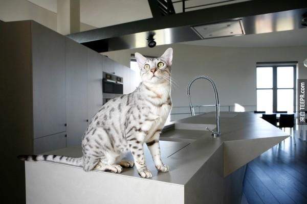 小猫咪当然很爱这个水塔窝。