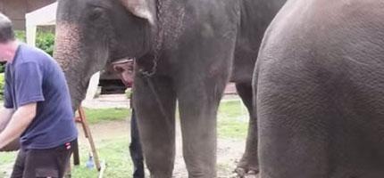 這名男子彈奏鋼琴給幾隻大象聽,但是他從來沒有想到其中一隻大象會做這樣的事情。