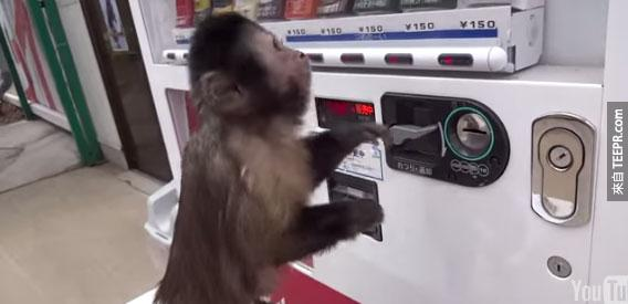 你說這隻小猴子拿了錢去做什麼?這太誇張了!