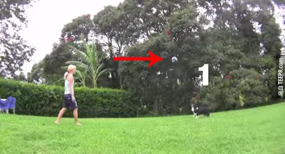 這隻不可思議的狗居然比我還會打排球。太厲害了!