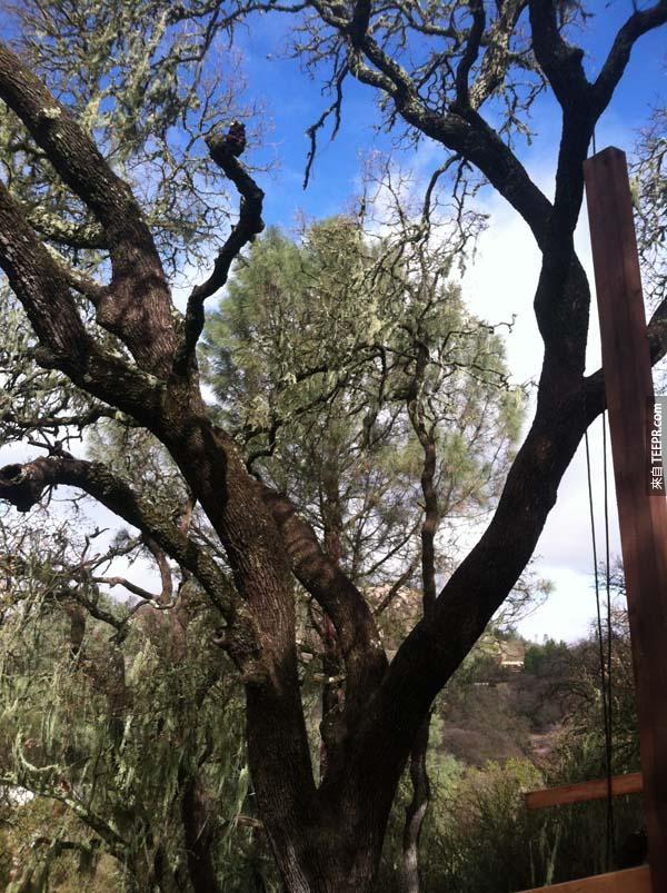 本來只是一棵平凡無奇的樹,但是過了2個月之後,它變成了一個經典的傑作。我羨慕死了!