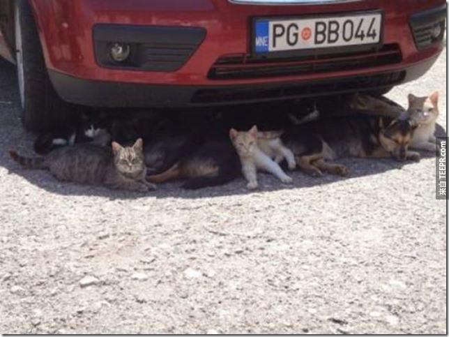 所有的動物都躲在你的車子下面。