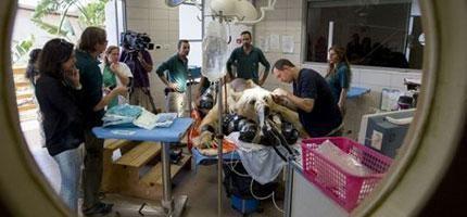 哇賽!他們到底在做什麼...我從來沒有見過這麼不可思議的手術。