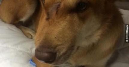 這名男子不知道為什麼他的狗忽然向他撲來。後來才知道是為了救他的命。
