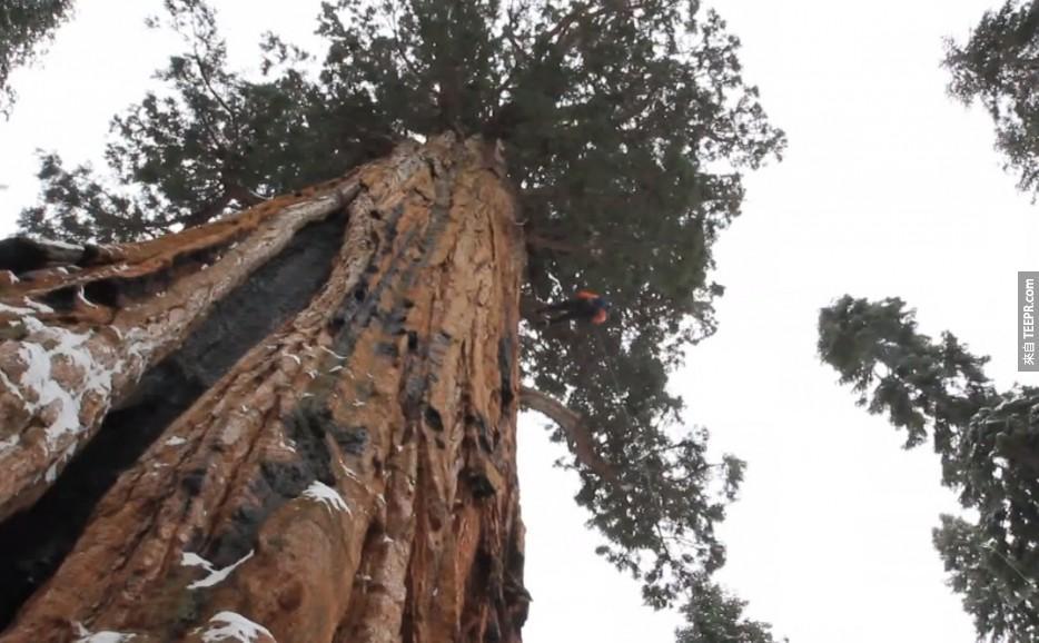 這棵3200年的神木大到一直無法把它拍進同一張照片裡...直到現在。