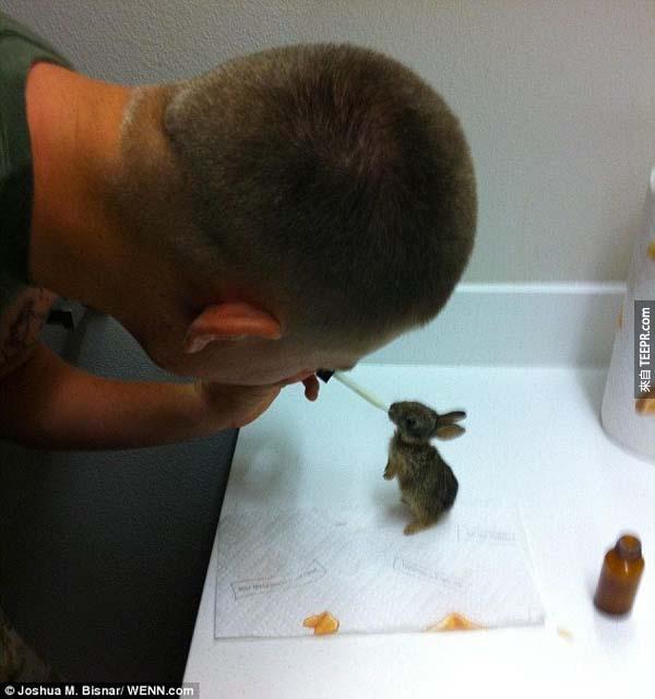 37.) 一位軍人救了一隻兔子,並決定領養他。他花了很多時間救活這隻小可愛。