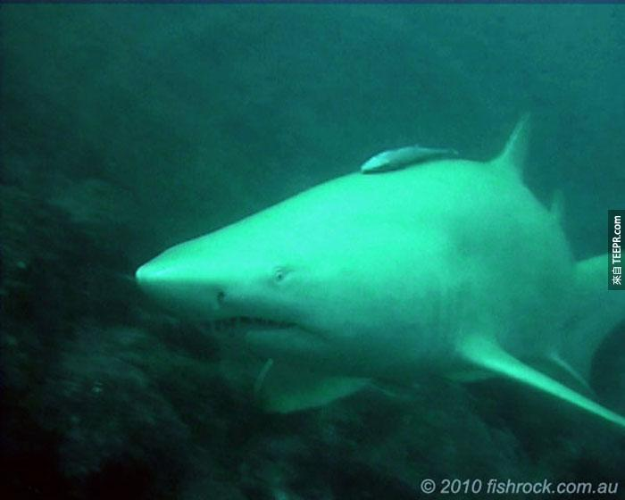 23) Shark