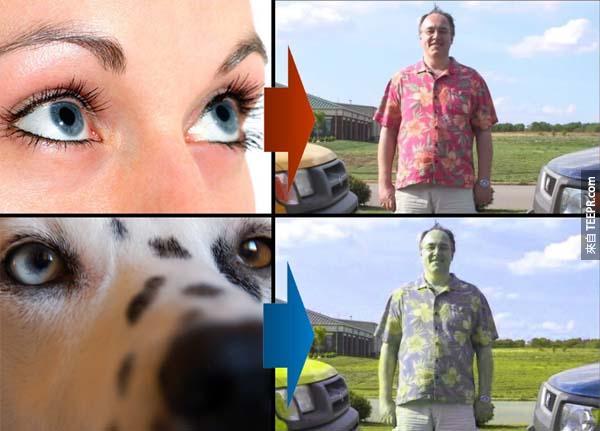 5.) 狗並不是完全的色盲,他們可以看見藍色、黃色和灰色。