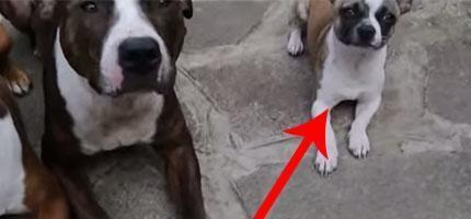 看到這3隻狗了沒有?因為在幾秒鐘內,有兩隻會被整慘!超爆笑!