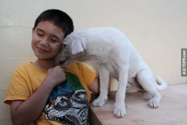 這隻白色的狗狗現在也是一隻黏人的小寶貝。