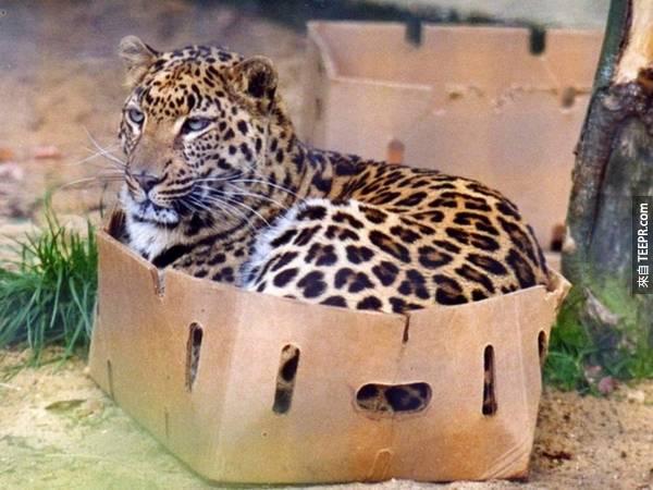 這些照片充分證明動物都喜歡往小的空間裡塞。家裡有寵物的都一定會知道。#5太中肯了!