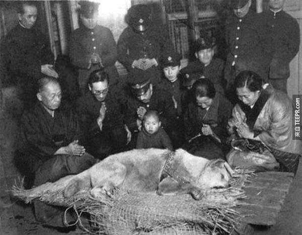 19)他的埋葬前敬愛的八公。