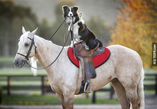 Hekan在位在澳大利亞墨爾本的Equestrian Excellence工作。