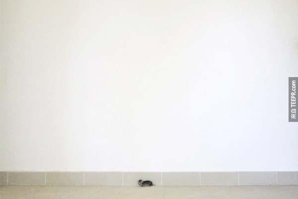 他們原本以為只是牆邊的小老鼠。但是發現到是什麼的時候...心都融化掉了!