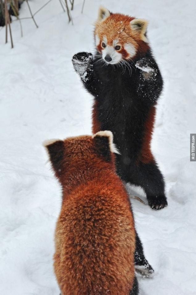 紅熊貓在不同的地方各有不同的稱呼。像是在尼泊爾(Nepal),他們被稱為「bhalu biralo」;雪爾帕人(Sherpas)則稱他們為「ye niglva ponva」或「wah donka」。