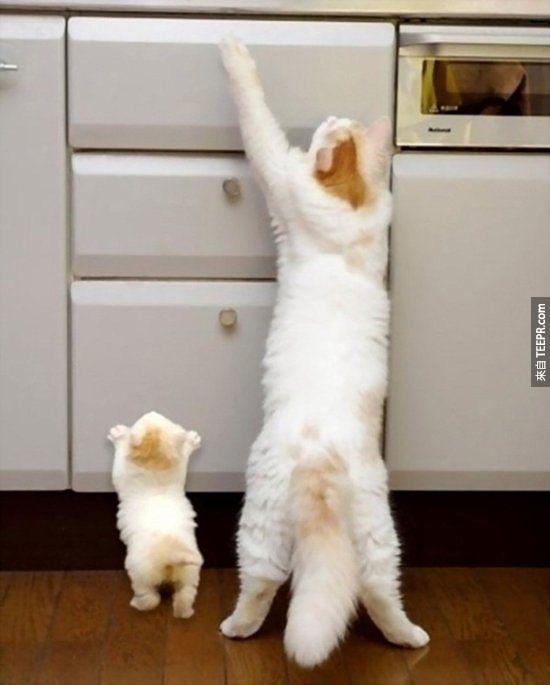 like-father-son-similar-13