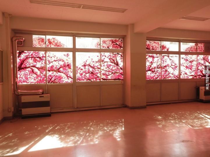 我原本還以為只是教室外的美麗櫻花樹,但是我近看的時候被嚇壞了!