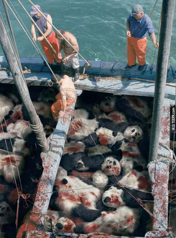 28.) 鮪魚快要絕種了。如果是熊貓的話,你還會繼續讓這樣的事情發生嗎?