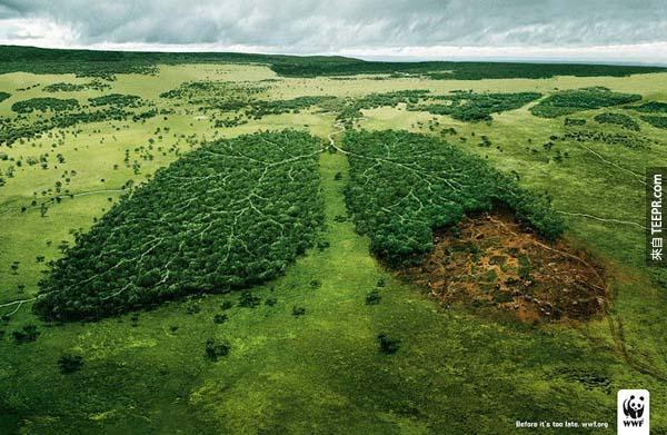 32.) 森林砍伐會改變我們的空氣。