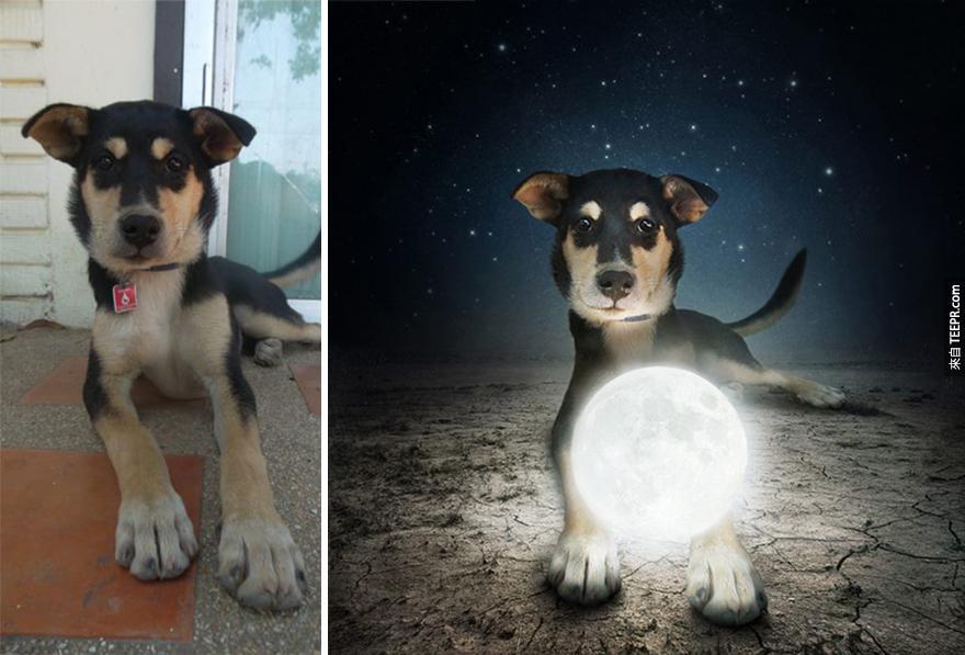 這名藝術家幫狗兒找寄養家庭的方法真的太有效了。這些照片讓人看得不領養都不行!