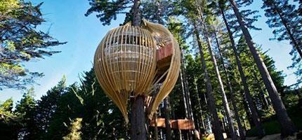 這掛在130英呎高的樹屋餐廳是我最想要用餐的地方。這根本就是早餐天堂!