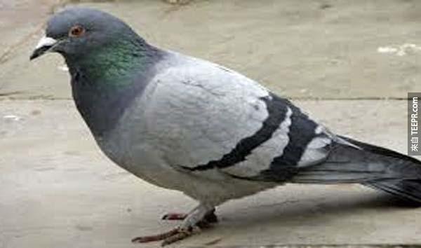 13.) 鴿子密碼(Pigeon Cipher): 有一隻鴿子的遺體在煙囪內被發現,他身上綁著一些二戰時期的訊息。