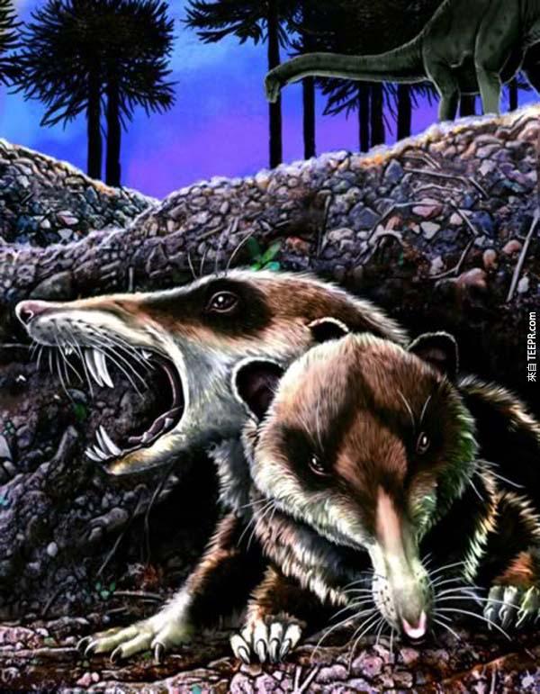 這10個化石讓我們看到遠古的世界比我們現在的恐怖1000倍!超有趣但卻又讓人很害怕!
