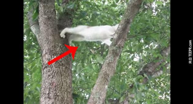 小貓咪困在樹上,貓媽媽用最幫的方式救他
