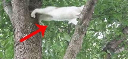 這隻貓媽媽教育她困在樹上的孩子的方法是我見過最棒的。所有人類都應該要學學。