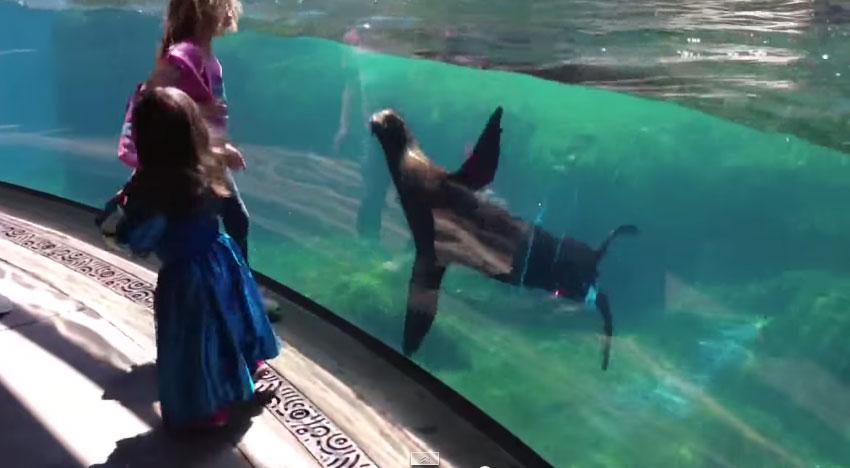 這個小女生在水族館跌倒。這隻海獅看到後的反應會徹底改變你對動物的認知!