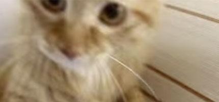 通常動物不是都很怕吸塵器嗎?但是這隻貓碰到吸塵器的時候會做一件最奇怪的事情。(大笑中)