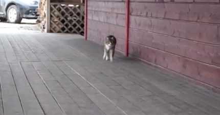 我不知道為什麼,但是這隻自以為是馬的貓咪讓我看得停不下來。