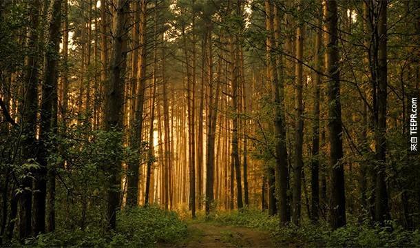 5. Hylophobia:樹木恐懼症