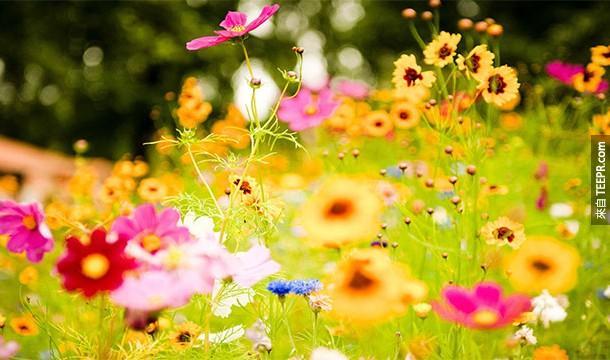 6. Anthophobia:花朵恐懼症