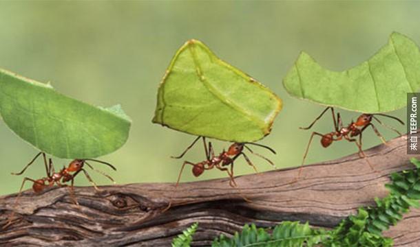 8. Myrmecophobia:螞蟻恐懼症