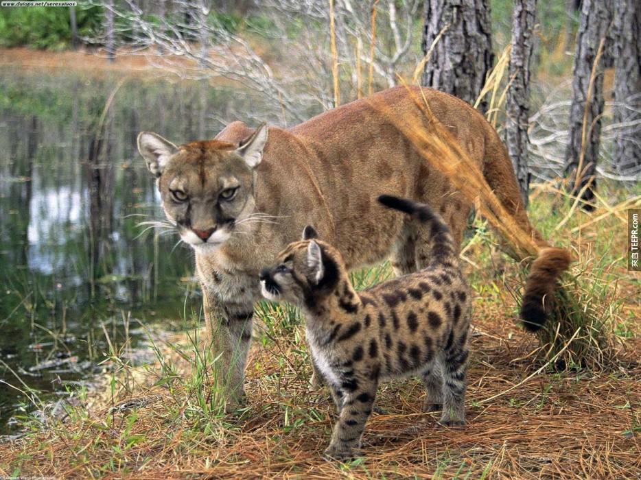 我們必須要拯救這23種瀕臨絕種的動物,因為你我都需要他們!特別是#10。