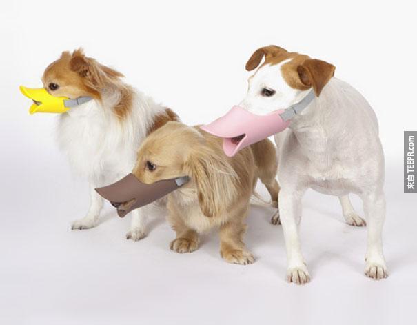 16.)怕狗狗亂咬嗎?戴上這個可愛多了。
