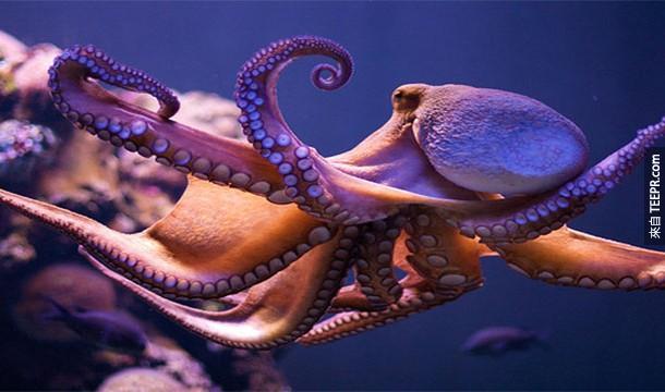 21.) 章魚竟然有3個心臟!