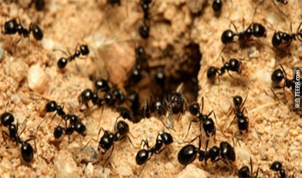 7.)地球上的每個人都相當等於160萬隻螞蟻。