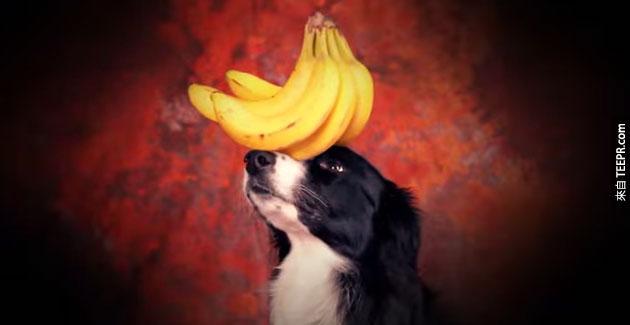 這隻神奇的狗可以平衡一些連你都無法平衡的東西。而且這還不只呢...