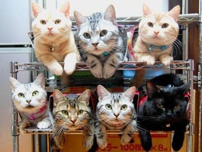 Multiple%20cats%3F%20Stack%20those%20babies%20on%20seperate%20shelves.%20