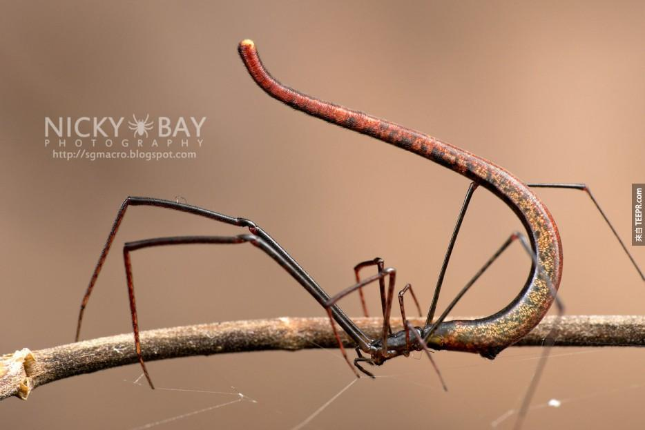 我怕蜘蛛怕到晚上有時都會睡不著覺,但是這21隻蜘蛛真的太酷了!