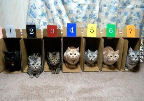 Color%20and%20number%20coded%20cubbies%20are%20perfect%20for%205+%20cats.%20