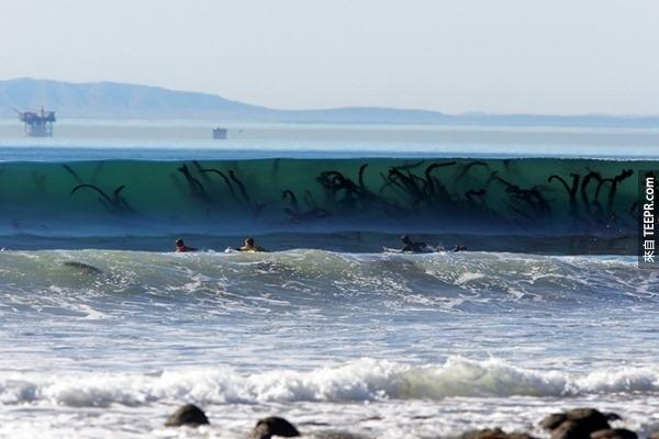13. 別怕,那個黑黑一條一條的是海藻啦!
