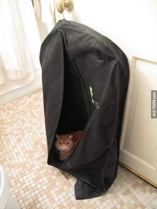 1. 讓他們睡在西裝套裡面。