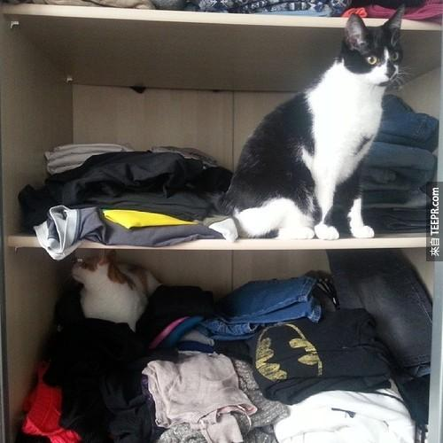Sometimes%20they%20need%20their%20own%20space%2C%201%20cat%20per%20shelf%20will%20do.%20