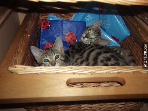 Kittens%20and%20baskets%20go%20great%20together.%20