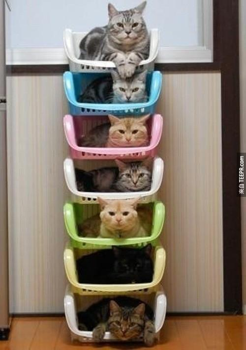 Invest%20in%20color-coordinated%20cat%20stacks.%20